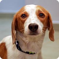 Adopt A Pet :: Gael Monfils - Madison, NJ