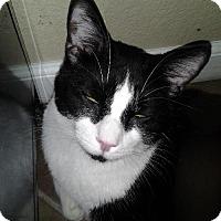 Adopt A Pet :: Bruno - Chandler, AZ