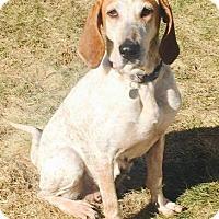 Adopt A Pet :: Luella - Toledo, OH