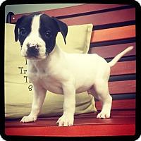 Adopt A Pet :: Mclovin - Grand Bay, AL