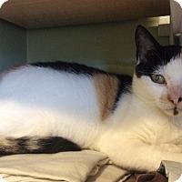 Adopt A Pet :: Dahlia - Breinigsville, PA