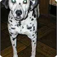 Adopt A Pet :: Laddie - Milwaukee, WI