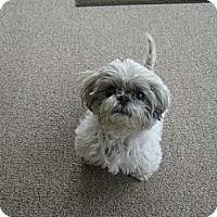 Adopt A Pet :: Butterscotch - Denver, CO