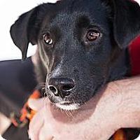 Adopt A Pet :: Grant (Stix) - Scottsdale, AZ
