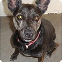 Adopt A Pet :: Skylor - Winter Haven, FL