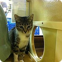 Adopt A Pet :: Foxxy - Monroe, GA