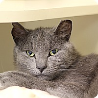 Adopt A Pet :: Turk - Chicago, IL