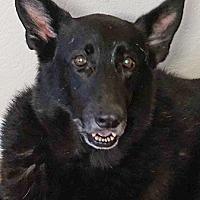 Adopt A Pet :: Ace - Manor, TX
