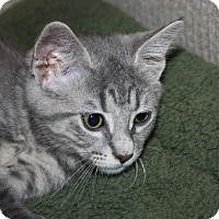Adopt A Pet :: Fielder (LE) - Little Falls, NJ
