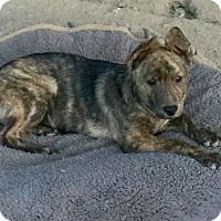 Adopt A Pet :: Jessie - Long Beach, CA