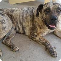 Adopt A Pet :: Cindy - Saskatoon, SK