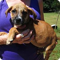 Adopt A Pet :: FONZIE - Brookside, NJ