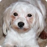 Adopt A Pet :: Rory - Phoenix, AZ