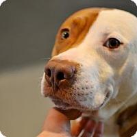Adopt A Pet :: Jock - New Orleans, LA