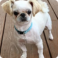 Adopt A Pet :: Angus - Atlanta, GA
