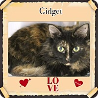 Adopt A Pet :: Gidget - Harrisburg, NC