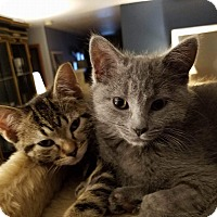Adopt A Pet :: Hey You and Meow - Loveland, CO