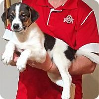 Adopt A Pet :: Tank - New Philadelphia, OH