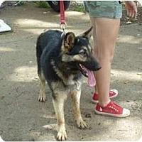 Adopt A Pet :: Gracelyn - Glastonbury, CT