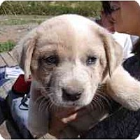 Adopt A Pet :: Justice *Adopted* - Phoenix, AZ