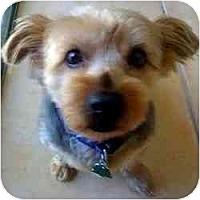 Adopt A Pet :: Buddy - Homestead, FL