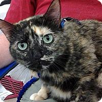 Adopt A Pet :: Bess - Homosassa, FL