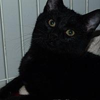 Adopt A Pet :: Clyde - Stafford, VA