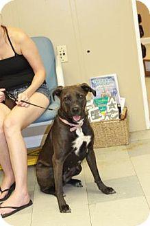 Australian Cattle Dog Mix Dog for adoption in Covington, Louisiana - Pumpkin