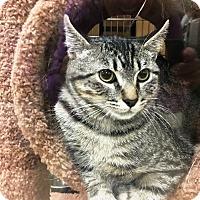 Adopt A Pet :: Argan - Riverside, CA