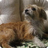 Adopt A Pet :: Molly - La Habra Heights, CA