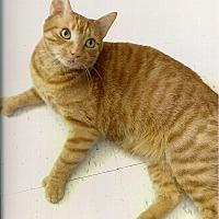 Adopt A Pet :: Brady - Medway, MA