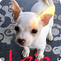 Adopt A Pet :: Leia - Tempe, AZ