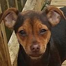 Adopt A Pet :: Twix