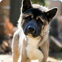 Adopt A Pet :: Kato - Toms River, NJ