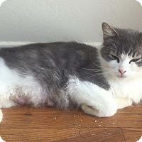 Adopt A Pet :: Jellybean - Cleveland, OH