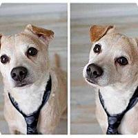 Adopt A Pet :: Jojo - Summerville, SC