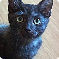 Adopt A Pet :: Sinbad - Escondido, CA