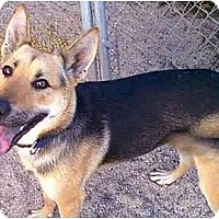 Adopt A Pet :: Samantha - dewey, AZ