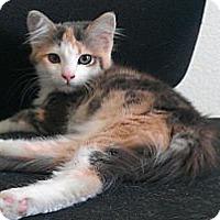 Adopt A Pet :: Beka - Escondido, CA
