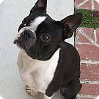 Adopt A Pet :: Jerry - Temecula, CA