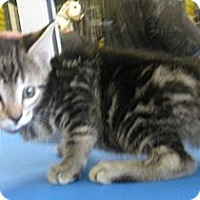 Adopt A Pet :: Asia - Dallas, TX