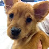 Adopt A Pet :: Savannah - Gilbert, AZ
