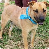 Adopt A Pet :: BARNEY - Bedminster, NJ