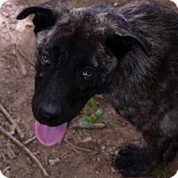 Adopt A Pet :: Miggy (Now $100 off adoption f - Brattleboro, VT