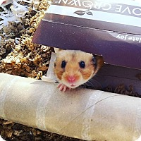 Adopt A Pet :: Rollo - Bensalem, PA