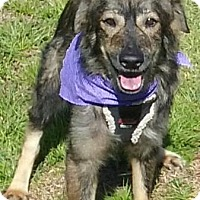 Adopt A Pet :: Prince - Fort Pierce, FL