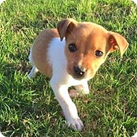 Adopt A Pet :: Blake - Wharton, TX