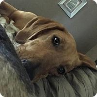 Adopt A Pet :: Chloe - Northport, AL