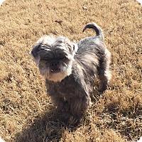 Adopt A Pet :: Chewy - Colmar, PA