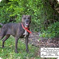 Adopt A Pet :: Ritzy - North Myrtle Beach, SC